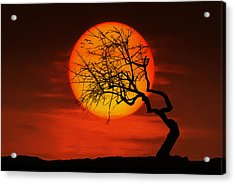 Sunset Tree Acrylic Print by Bess Hamiti