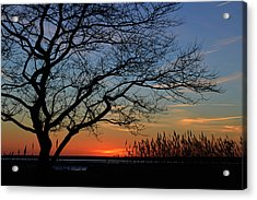 Sunset Tree In Ocean City Md Acrylic Print