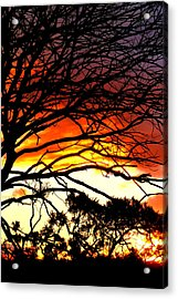 Sunset Tree Silhouette Acrylic Print by The Creative Minds Art and Photography
