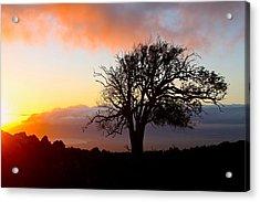 Sunset Tree In Maui Acrylic Print