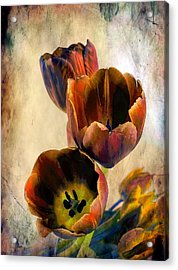 Sunset Tulips Acrylic Print