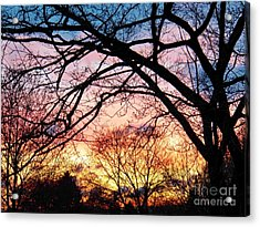 Sunset Under The Dogwoods Acrylic Print by Judy Via-Wolff