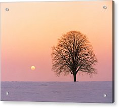 Sunset View Of Single Bare Tree Acrylic Print by Panoramic Images