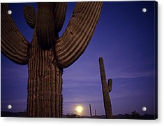Sunset With Moonise Behind Saguaro Cactus In Desert Southwest Ar Acrylic Print