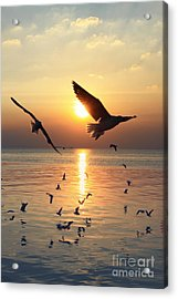 Sunset With Seagull Acrylic Print by Tosporn Preede