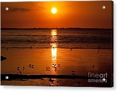 Acrylic Print featuring the photograph Sunset With The Birds Photo by Meg Rousher