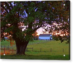 Sunset With Tree Acrylic Print