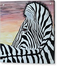 Sunset Zebra Acrylic Print by Steven White