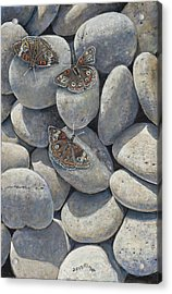Sunshine And Butterflies Acrylic Print
