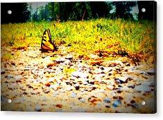 Sunshine Butterfly Acrylic Print