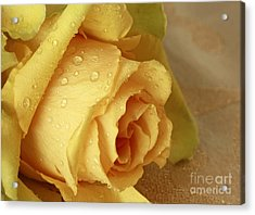 Sunshine Delight Yellow Rose Acrylic Print by Inspired Nature Photography Fine Art Photography