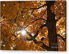Sunshine Gold Acrylic Print
