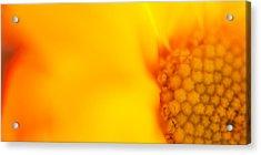 Sunshine Haiku  Acrylic Print by Lisa Knechtel