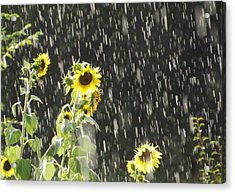 Sunshine In The Rain 2 Acrylic Print