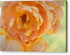 Acrylic Print featuring the photograph Sunshine by Julie Andel