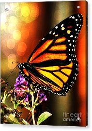 Sunshine Monarch  Acrylic Print by Mindy Bench