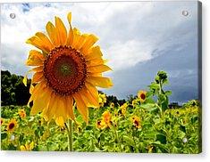Sunshine On A Cloudy Day Acrylic Print