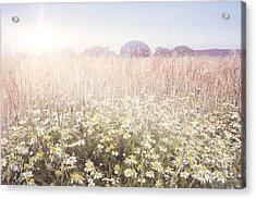 Sunshine Over The Fields Acrylic Print by Natalie Kinnear