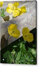 Sunshine Yellow Acrylic Print