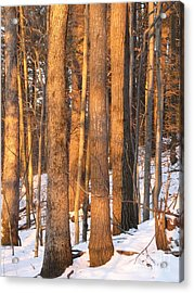 Sunwarmed In Winter Acrylic Print by Melissa Stoudt