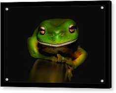 Super Frog 01 Acrylic Print by Kevin Chippindall