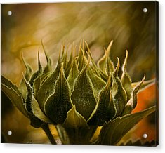 Super Sunflower Acrylic Print