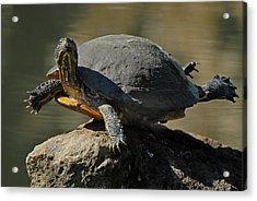 Super Turtle Acrylic Print by David Marr