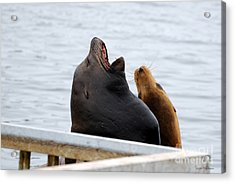 Supersized Sea Lion And Friend Acrylic Print