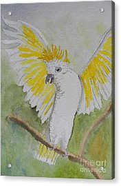 Suphar Crested Cockatoo Acrylic Print by Pamela  Meredith