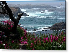 Surf And Turf Acrylic Print