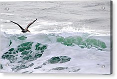 Acrylic Print featuring the photograph Surf N Pelican by AJ  Schibig