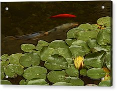 Acrylic Print featuring the photograph Surface Tension by Michael Gordon