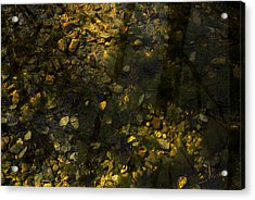 Surface Tension Acrylic Print