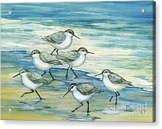 Surfside Sandpipers Acrylic Print by Paul Brent