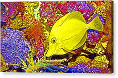 Surgeon Fish Yellow Tang Digital Art Acrylic Print