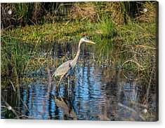 Surprise On The Trail Acrylic Print