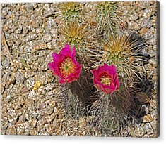 Surprising Blooms Acrylic Print