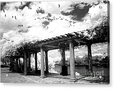 Surreal Augusta Georgia Black And White Infrared  - Riverwalk River Front Park Garden   Acrylic Print by Kathy Fornal