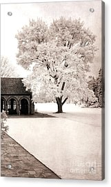 Surreal Dreamy Ethereal Winter White Sepia Infrared Nature Tree Landscape Acrylic Print by Kathy Fornal