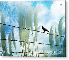 Surreal Dreamy Raven Sitting On Fence Blue Sky Acrylic Print by Kathy Fornal