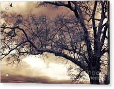 Surreal Fantasy Gothic South Carolina Tree Bird Acrylic Print