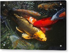 Surreal Fishpond Acrylic Print by Adria Trail