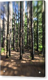 Surreal Forest Acrylic Print