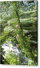 Surreal Garden Acrylic Print by James Dolan