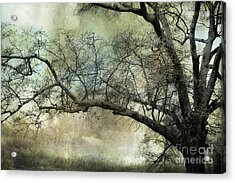 Surreal Gothic Dreamy Trees Nature Landscape Acrylic Print