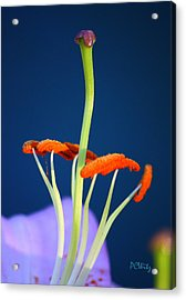 Acrylic Print featuring the photograph Surreal Inner Beauty by Patrick Witz