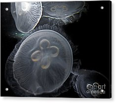 Surreal Jelly Fish  Acrylic Print by Valerie Garner