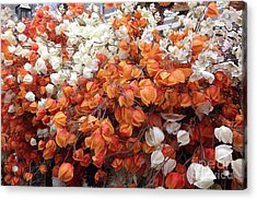 Surreal Orange And White Fall Leaves Branches And  Flowers - Colors Of Autumn Fall Leaves  Acrylic Print by Kathy Fornal