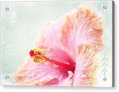 Surrender To Mystery Is The Highest Optimism  Acrylic Print