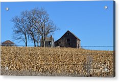 Surrounded By Corn Acrylic Print by Renie Rutten